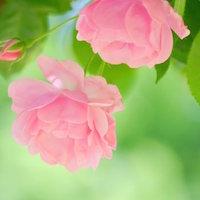 Pink nipple